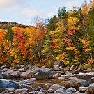Swift River Foliage by Katherine Murray