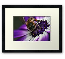 Bee in the midst ~ Framed Print
