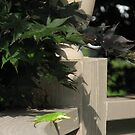 Curved Fence with a Lizard on it by JeffeeArt4u