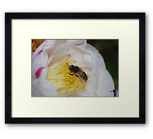 Bee Doing his Thing Framed Print