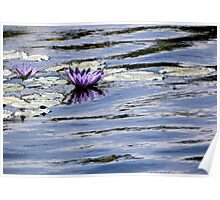 Water Lilies in Pastel Waters Poster