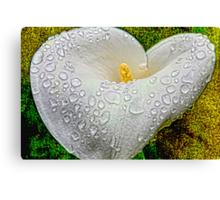 My Heart's Tears Canvas Print