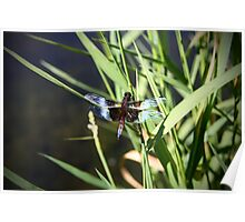 Dragonfly at the pond Poster