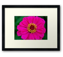 Pinky Touch! Framed Print