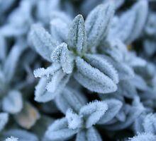 Frosty mornings  by Sarah-Ashley