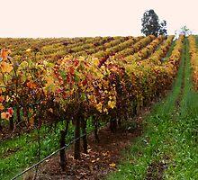 vines by Sarah-Ashley