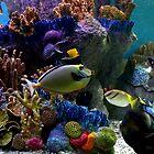 Fishville - New England Aquarium by redscorpion