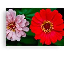 Red & Pink Canvas Print