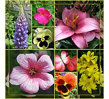 Lupin, Lilies, Geraniums and Pansies Collage Photographic Print