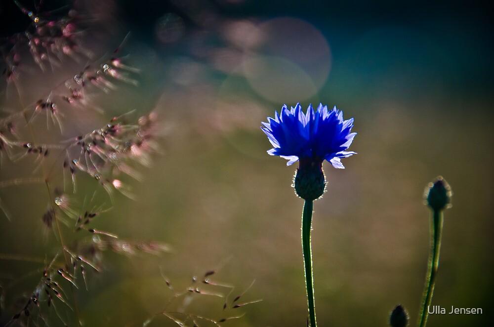 Symphony in blue by Ulla Jensen