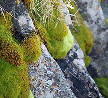 Moss & Lichen, Falls Creek, Victoria by Jane McDougall