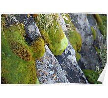 Moss & Lichen, Falls Creek, Victoria Poster