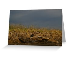 Drift Wood - Australia Greeting Card