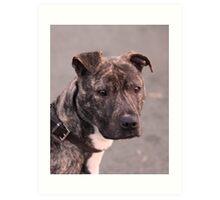 Mia : Staffordshire Bull Terrier Art Print