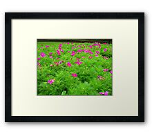 A Bed Of Pink Flowers  Framed Print