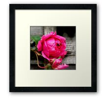 Leaning against a fence! Framed Print