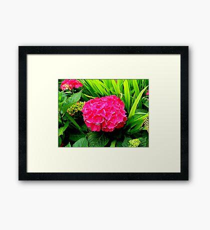 Brightfully Pink  Framed Print