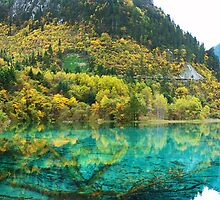 Reflection Of Spring by Jennifer Lam