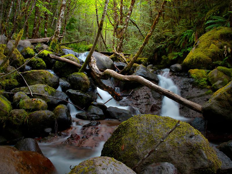Set Me Free - Boulder Creek - USA - by Charles & Patricia   Harkins ~ Picture Oregon
