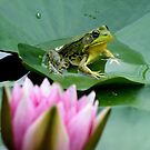 Frog on a Pad Watching Over the Water Garden by mikrin