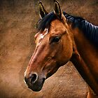 The horse portrait by AD-DESIGN
