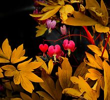 Bleeding Hearts in the Dark by Charles & Patricia   Harkins ~ Picture Oregon