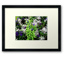A Touch Of Silver  Framed Print