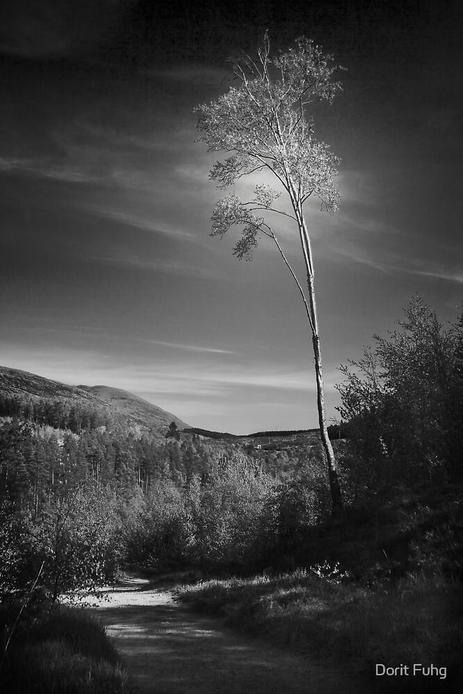 the loner by Dorit Fuhg
