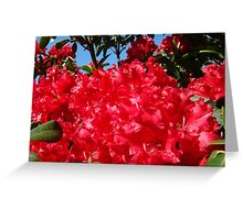 Red Rhododendrons Flowers Floral art prints Greeting Card