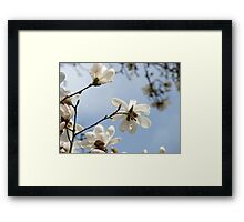 White Magnolia Flower Tree art prints Spring Framed Print