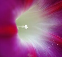 Morning Glory by marens