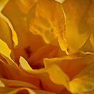 La Rosa by Ciaran Sidwell