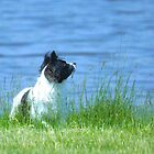 POND DOG by basalt101