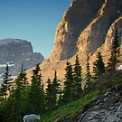 Glacier National Park 8 by Miles Glynn