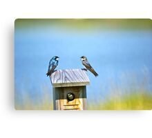 Tree Swallow Home Canvas Print