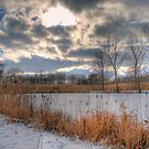 Cattail Cloudscape by John Cruz