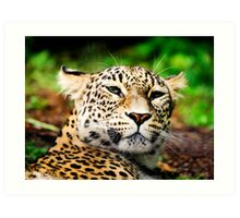 Leopard Portrait Close up  Art Print