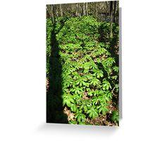 Wetland Tree Shadows Greeting Card