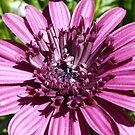 Macro of a Flower by MaeBelle