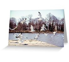 Seagulls on the water Greeting Card