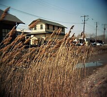 Reeds by the Creek by jamiecwagner