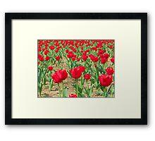 Spring Tulips - Netherlands Carillon Framed Print