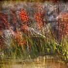 Misty Swamp by linaji