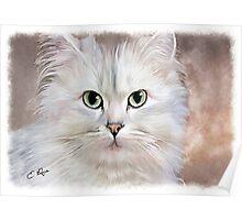 White Persian Cat Poster
