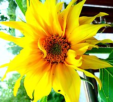 sunflower by christinecliff
