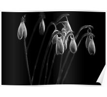 The ghosts of snowdrops Poster
