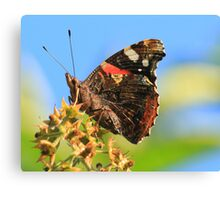 Red Admiral Butterfly, Nunnery Lane,Darlington,England Canvas Print