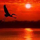 Flight at Sunrise by Richard Gaffney