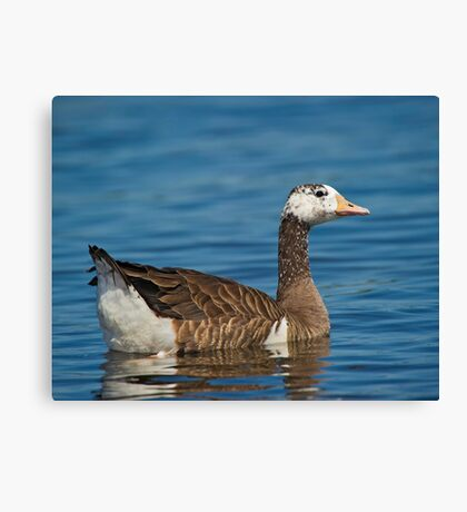 Not just another Goose Canvas Print