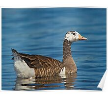 Not just another Goose Poster